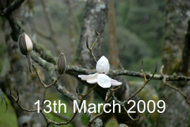 13th March 2009